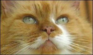 Rahasia Kucing Tertua di Dunia