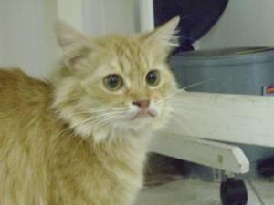 Kelainan Rahang dan Gigi Pada Kucing Kesayangan