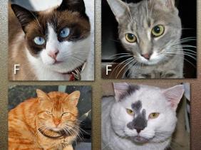 membedakan kucing janta dan betina