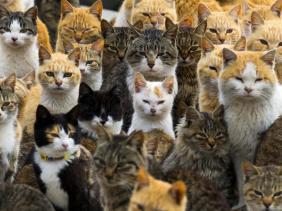 populasi kucing indonesia