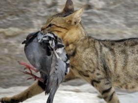 kucing dan flu burung