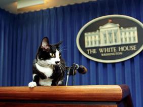 Socks kucing gedung putih milih Bill Clinton