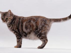 merawat kucing hamil atau bunting