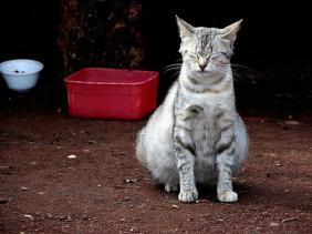 bunting palsu pada kucing ?