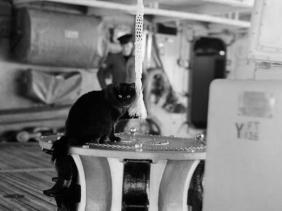 fakta kucing dalam perang dunia