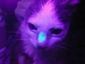 jamur ringworm pada kucing, bulu kucing rontok