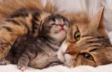 anak kucing mati karena beda golongan darah dengan ibunya