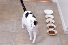bahaya kucing tidak mau makan