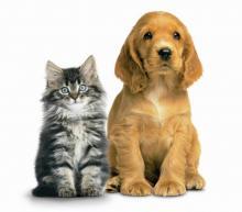 fakta kucing beda anjing dan kucing